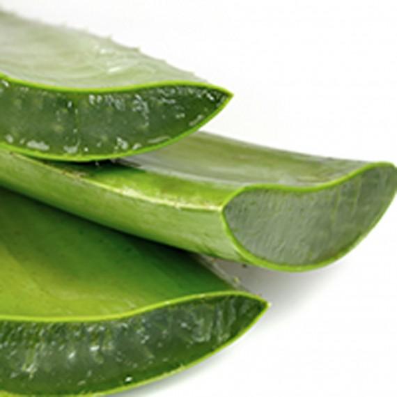 Олекотена завивка Aloe Vera Therapy - WHITE BOUTIQUE 1